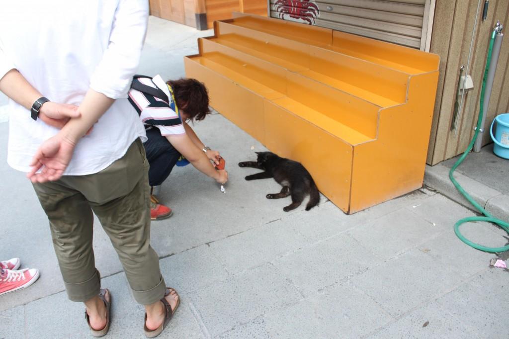 伊勢神宮内宮の猫