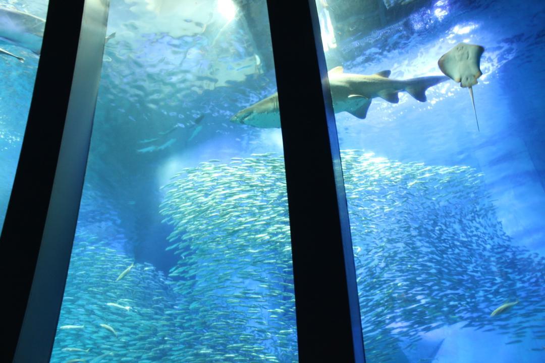 横浜八景島シーパラダイスの水族館アクアミュージアムにある巨大水槽