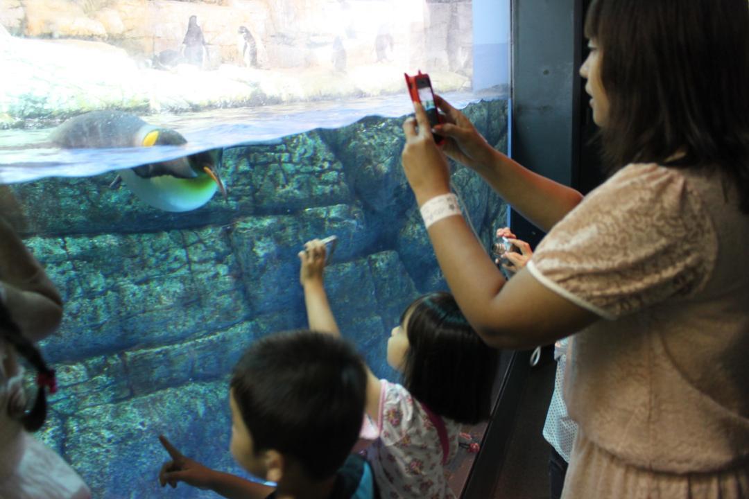 横浜八景島シーパラダイスの水族館アクアミュージアムにある水槽は見やすい