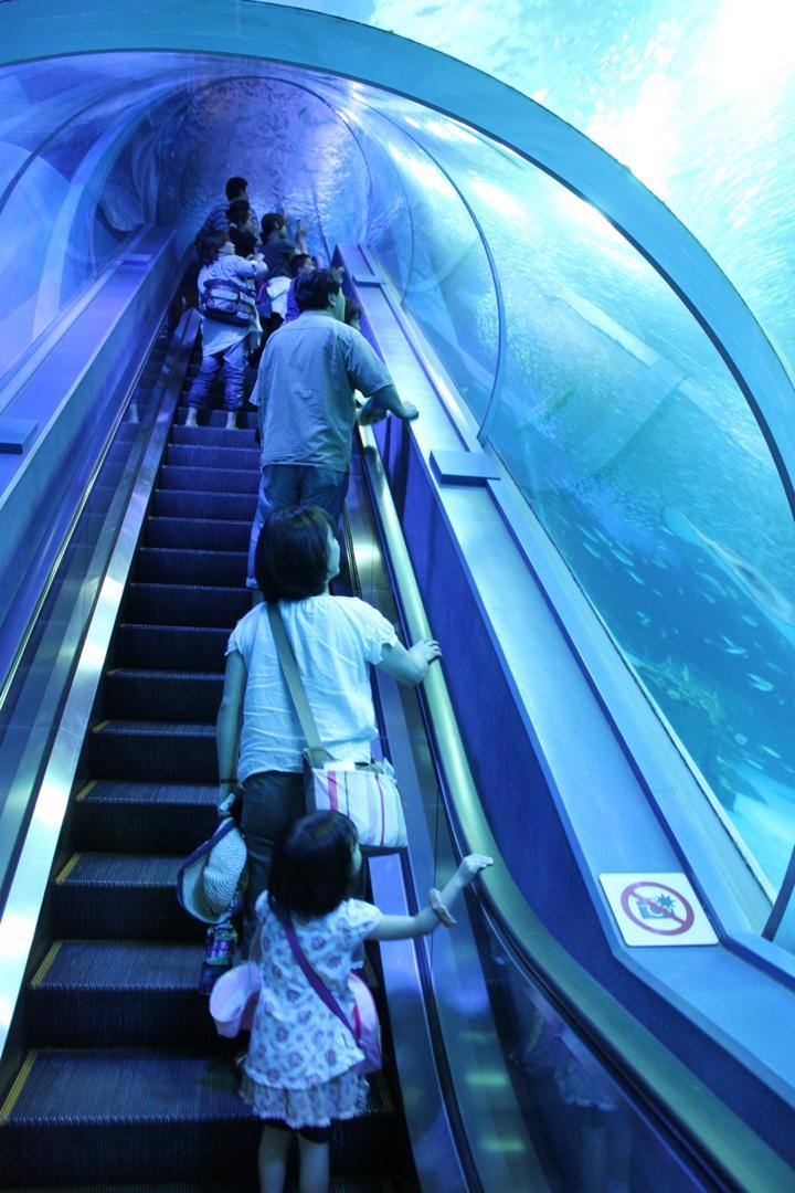 横浜八景島シーパラダイスの水族館アクアミュージアムにあるエレベーターは素敵