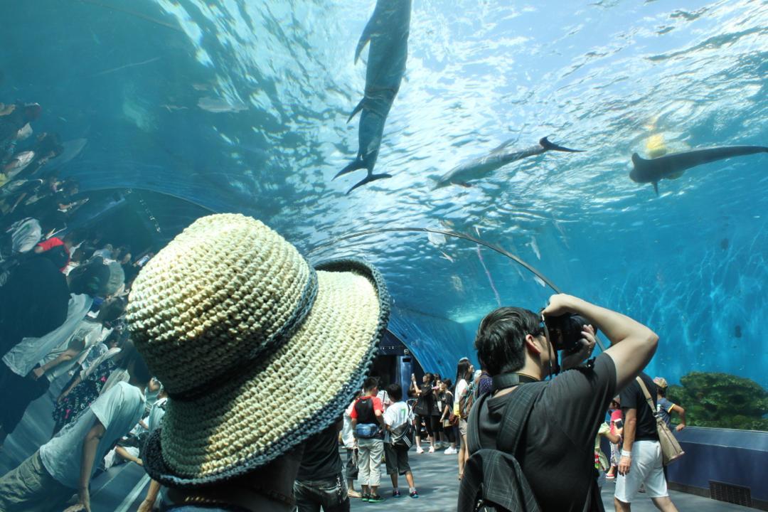 横浜八景島シーパラダイスのドルフィンファンタジー