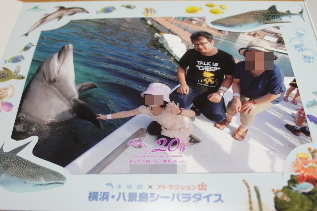 八景島シーパラダイスのイルカと握手