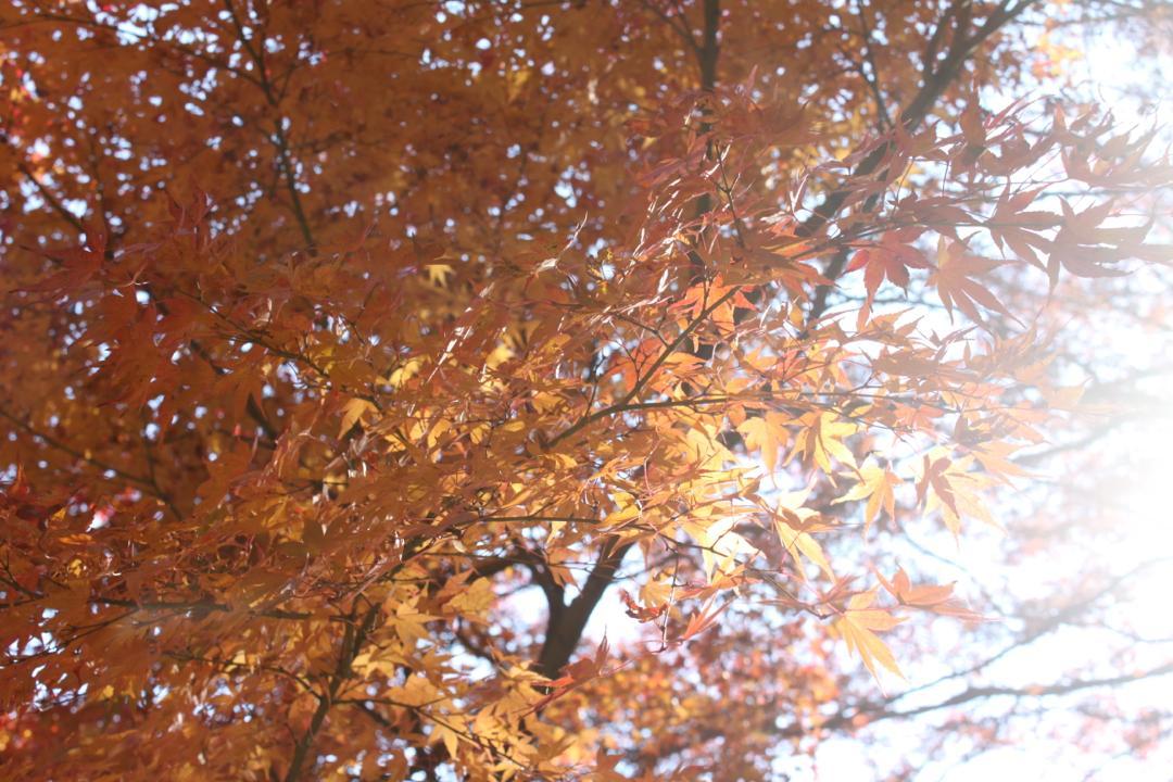 高尾山のきれいな紅葉