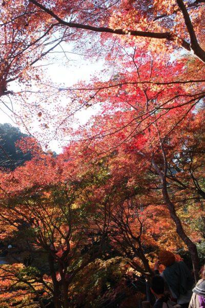 高尾山の紅葉シーズン