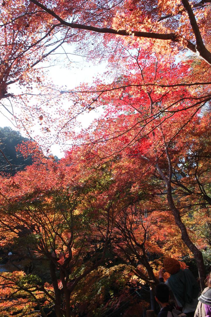 高尾山の真っ赤な紅葉