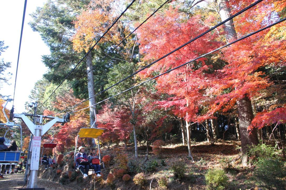 高尾山の紅葉のトンネル