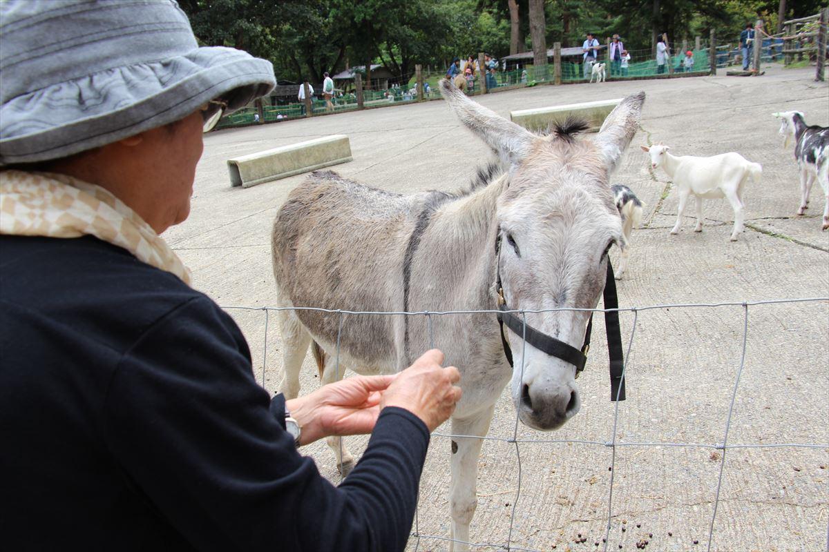 福島県の磐梯南ヶ丘牧場の動物たち