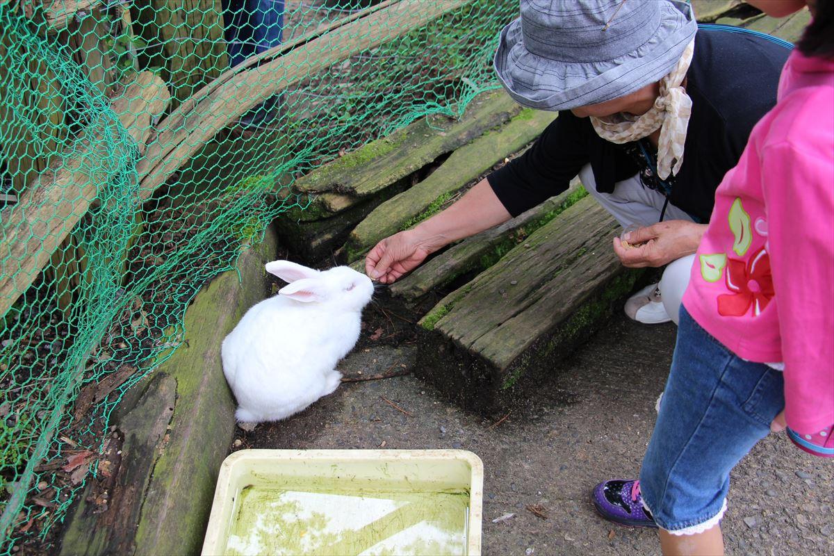 福島県の磐梯南ヶ丘牧場の可愛いウサギ