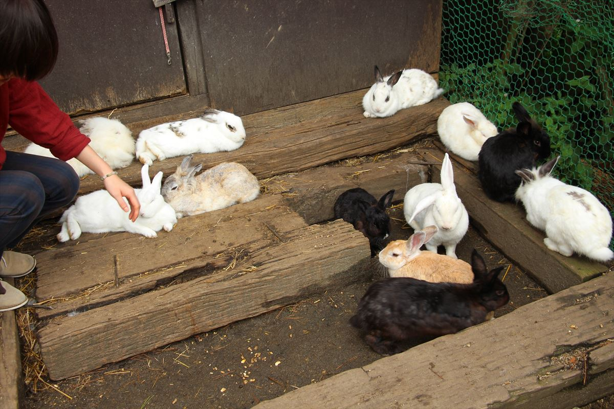 福島県の磐梯南ヶ丘牧場のウサギ