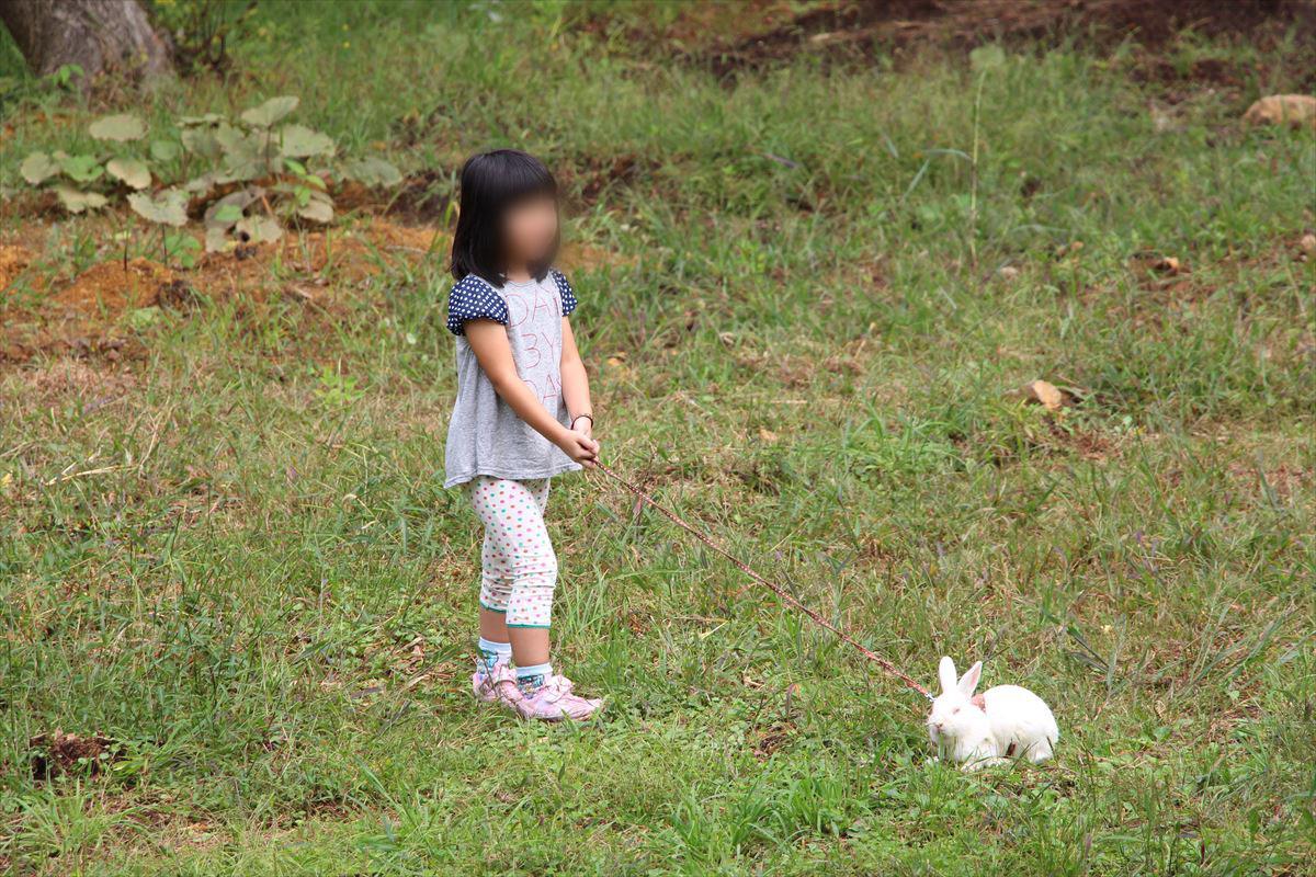 福島県の磐梯南ヶ丘牧場でウサギとお散歩
