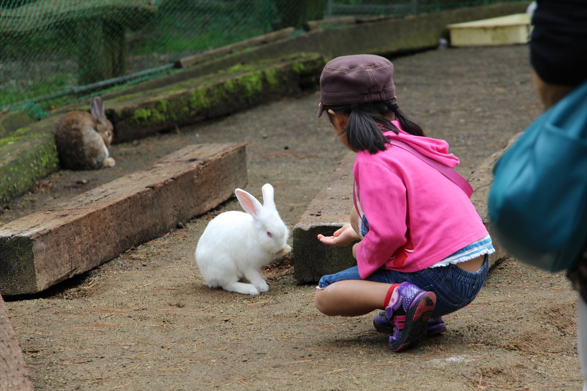 福島県の磐梯南ヶ丘牧場ではウサギにエサをあげられる