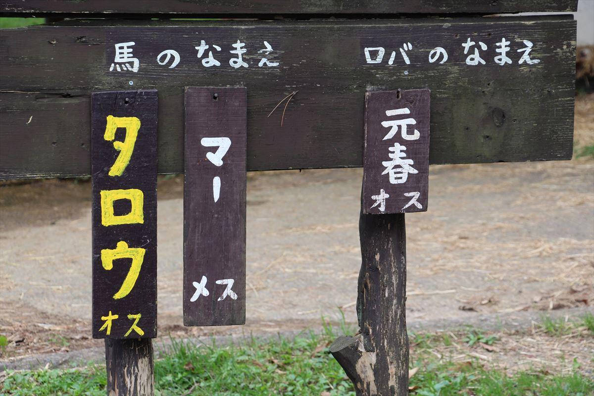 福島県の磐梯南ヶ丘牧場でロバに乗れる