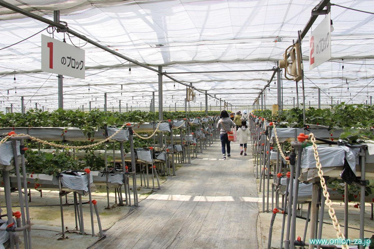 福島県のイチゴ狩り「四季の里いちご園」のビニールハウス