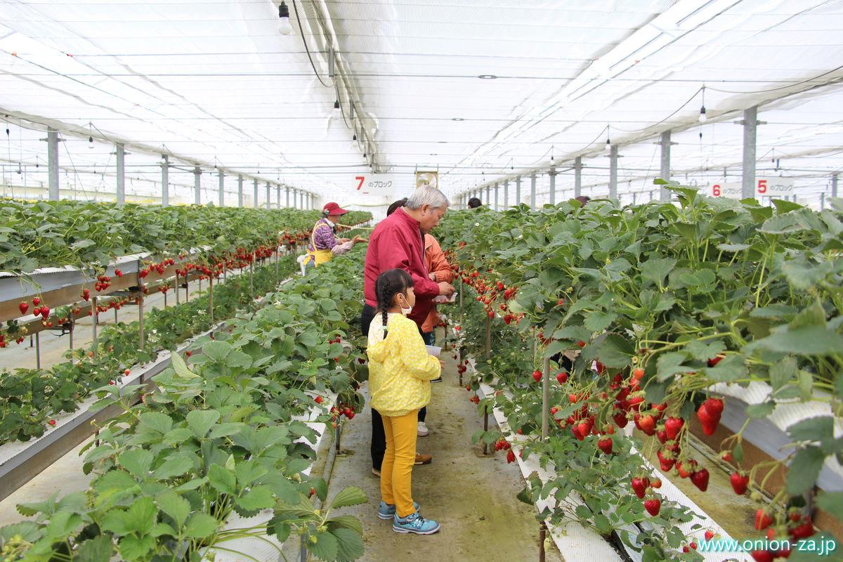 福島県の苺狩り「四季の里いちご園」の配置