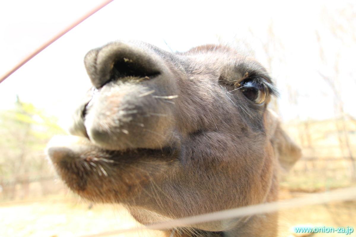 東北サファリパークの動物にエサをあげる