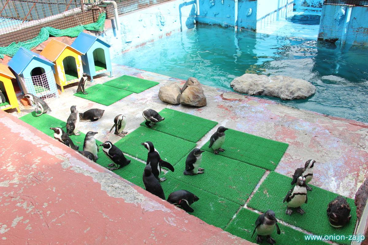 東北サファリパークのペンギンたち