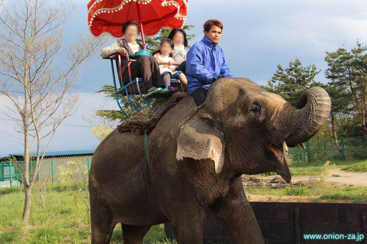 東北サファリパークで象に乗れる「ゾウの森」