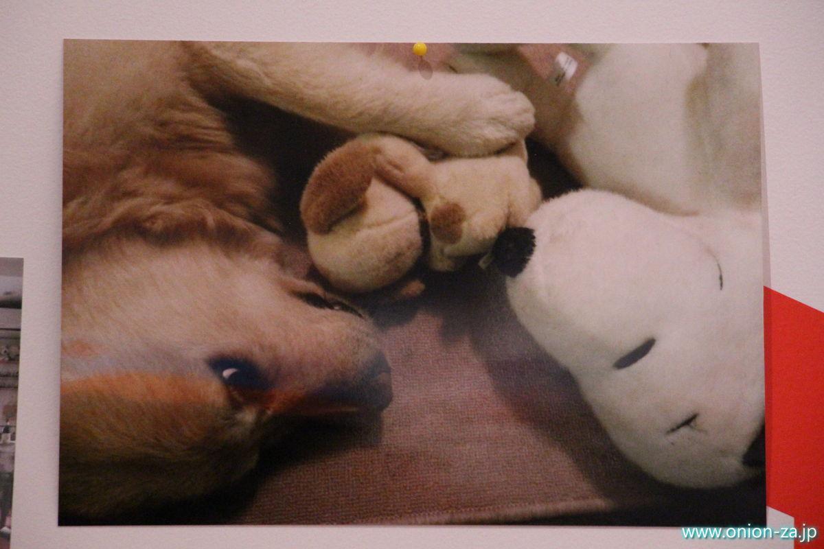 犬とスヌーピー