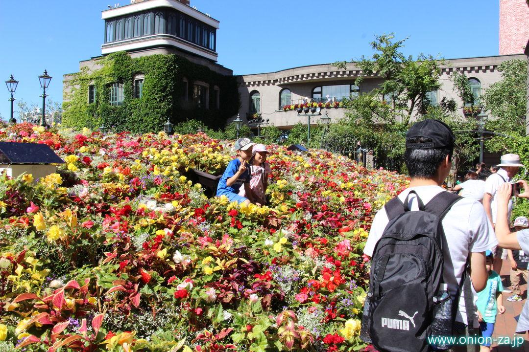 北海道の白い恋人パークにあるお花畑